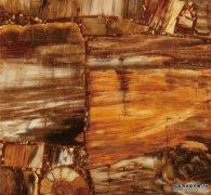 CD-630木化石